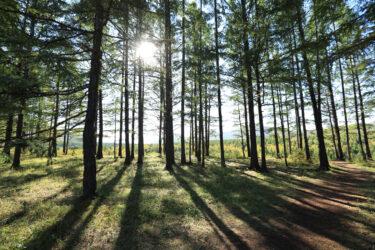 Gestión forestal sostenible 2021